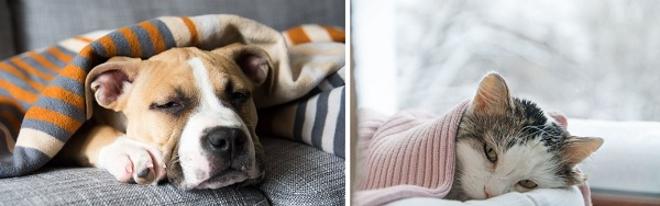 Caring for Sick Pets