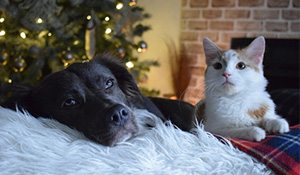 Pets During the Holidays
