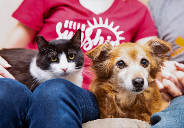 Pets Staying with Family and Friends